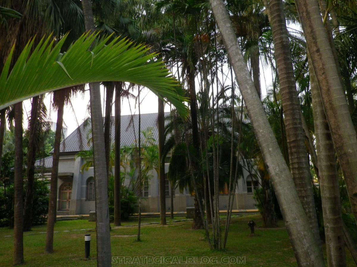 taichung taiwan palm trees (1)