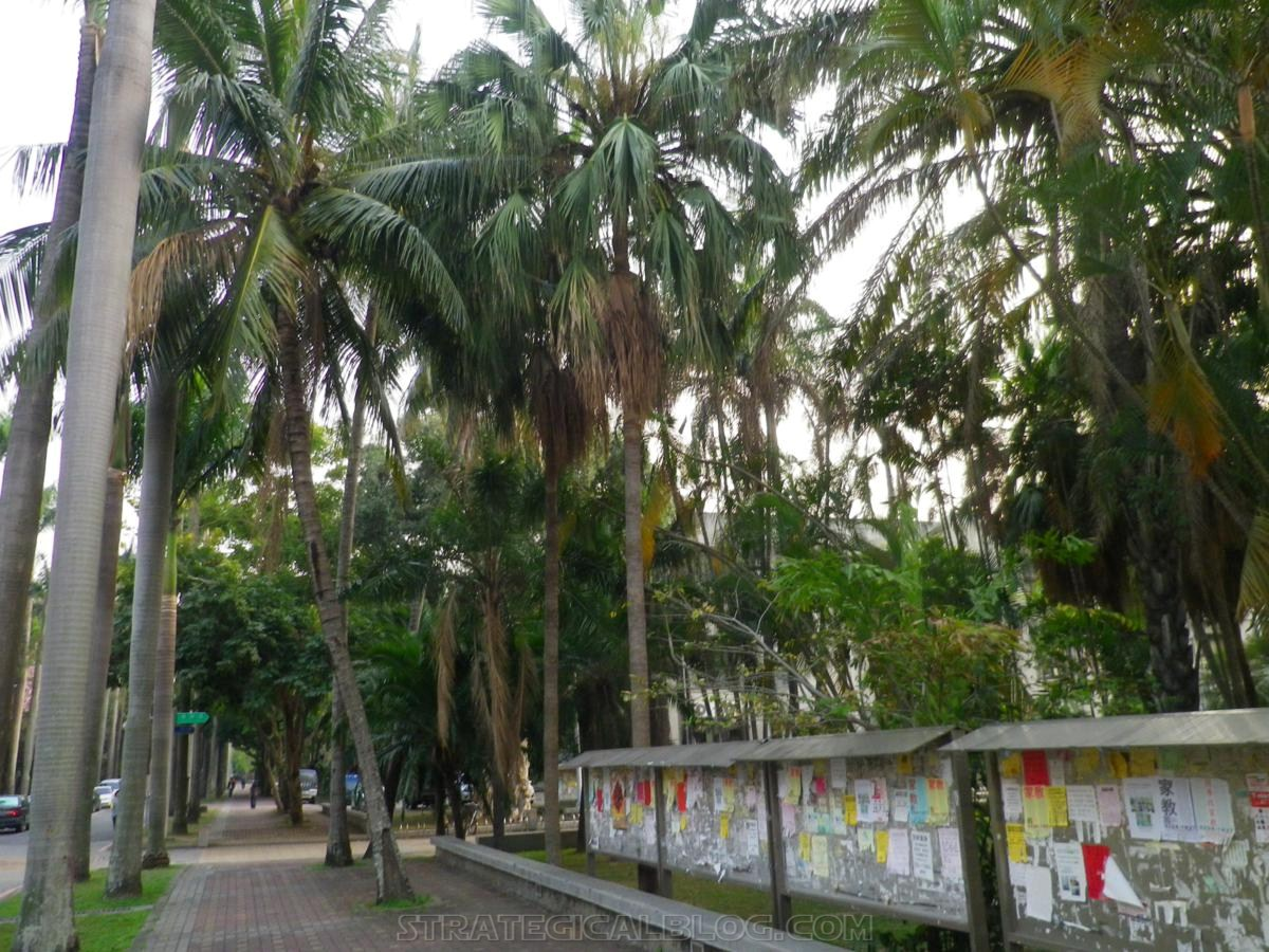 taichung taiwan palm trees (3)