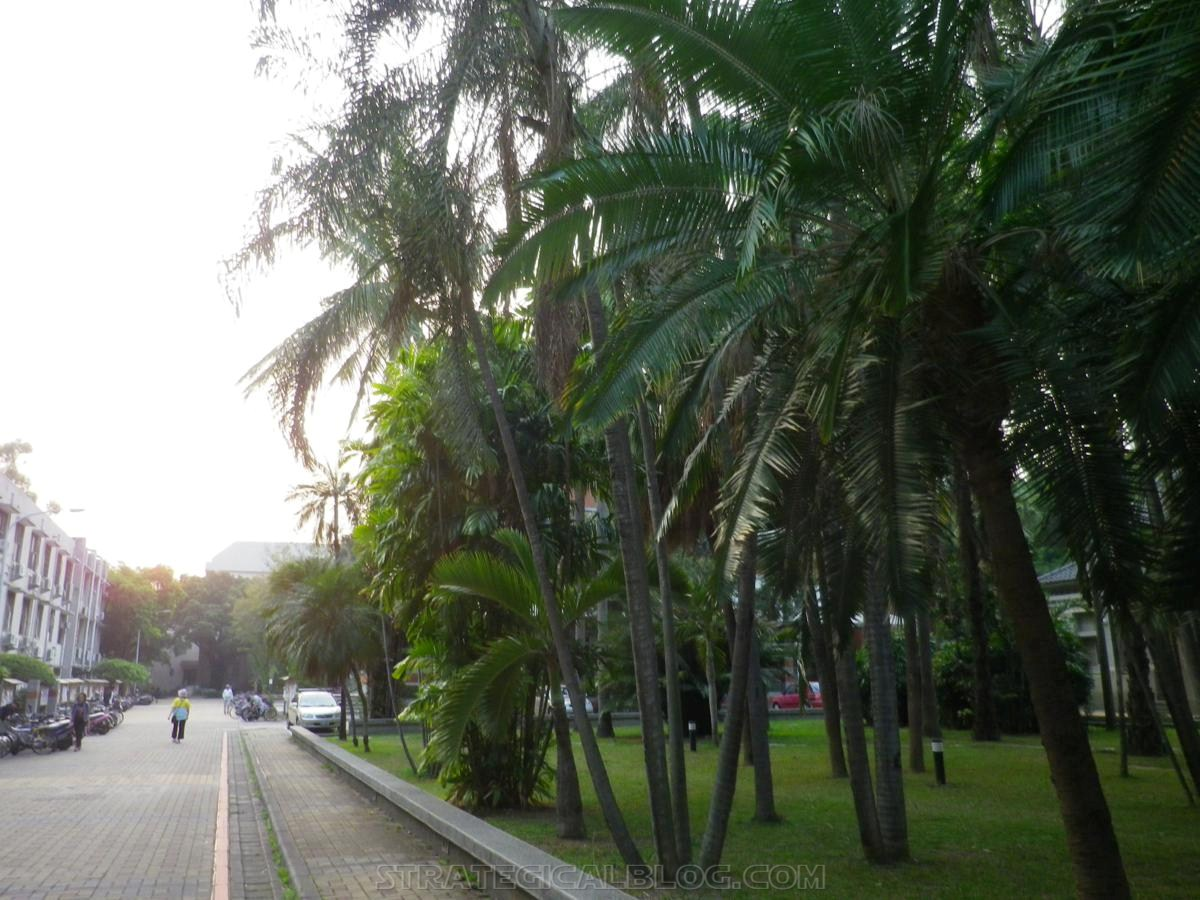 taichung taiwan palm trees (4)