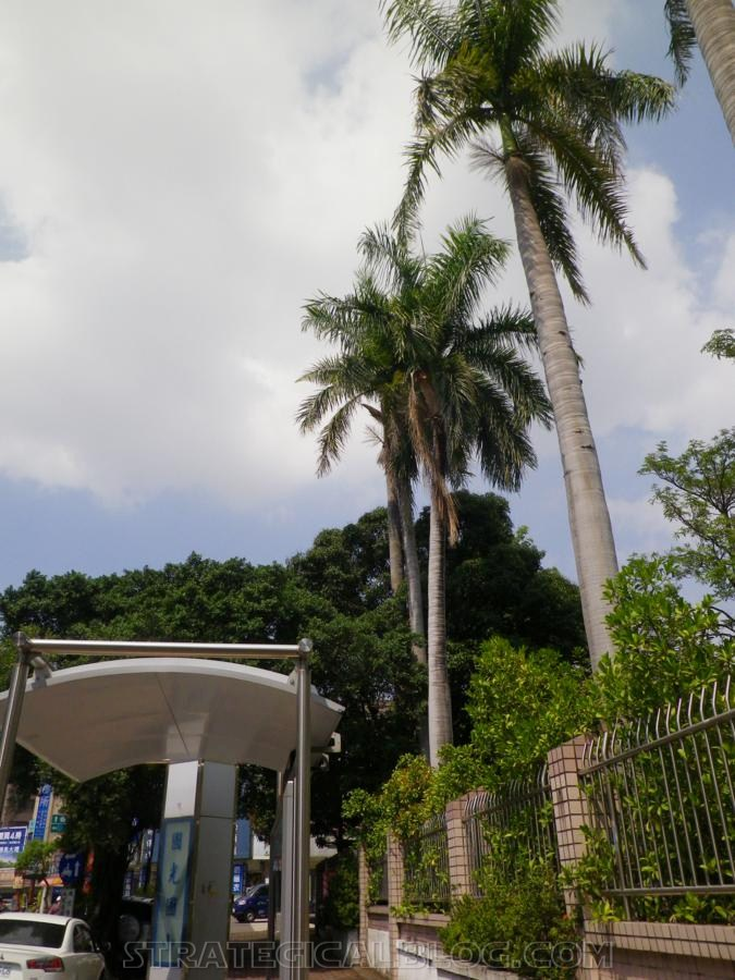 taichung taiwan palm trees (8)