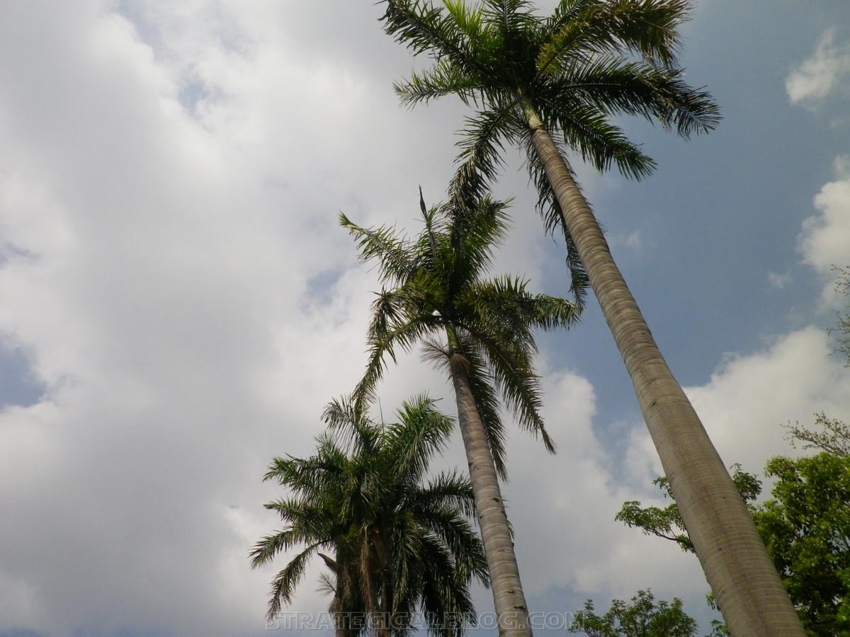 taichung taiwan palm trees (9)