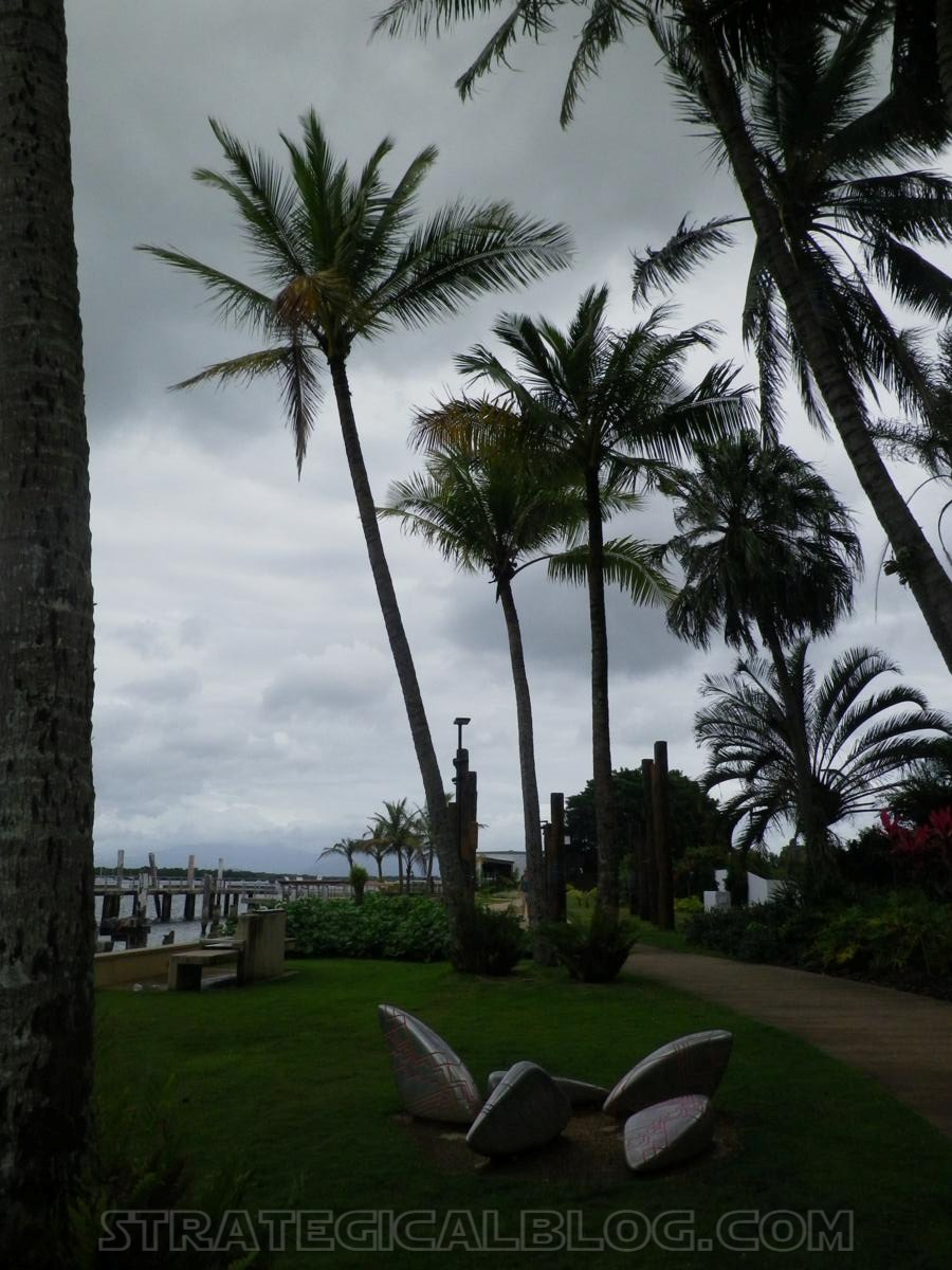 cairnswinter palm trees (2)