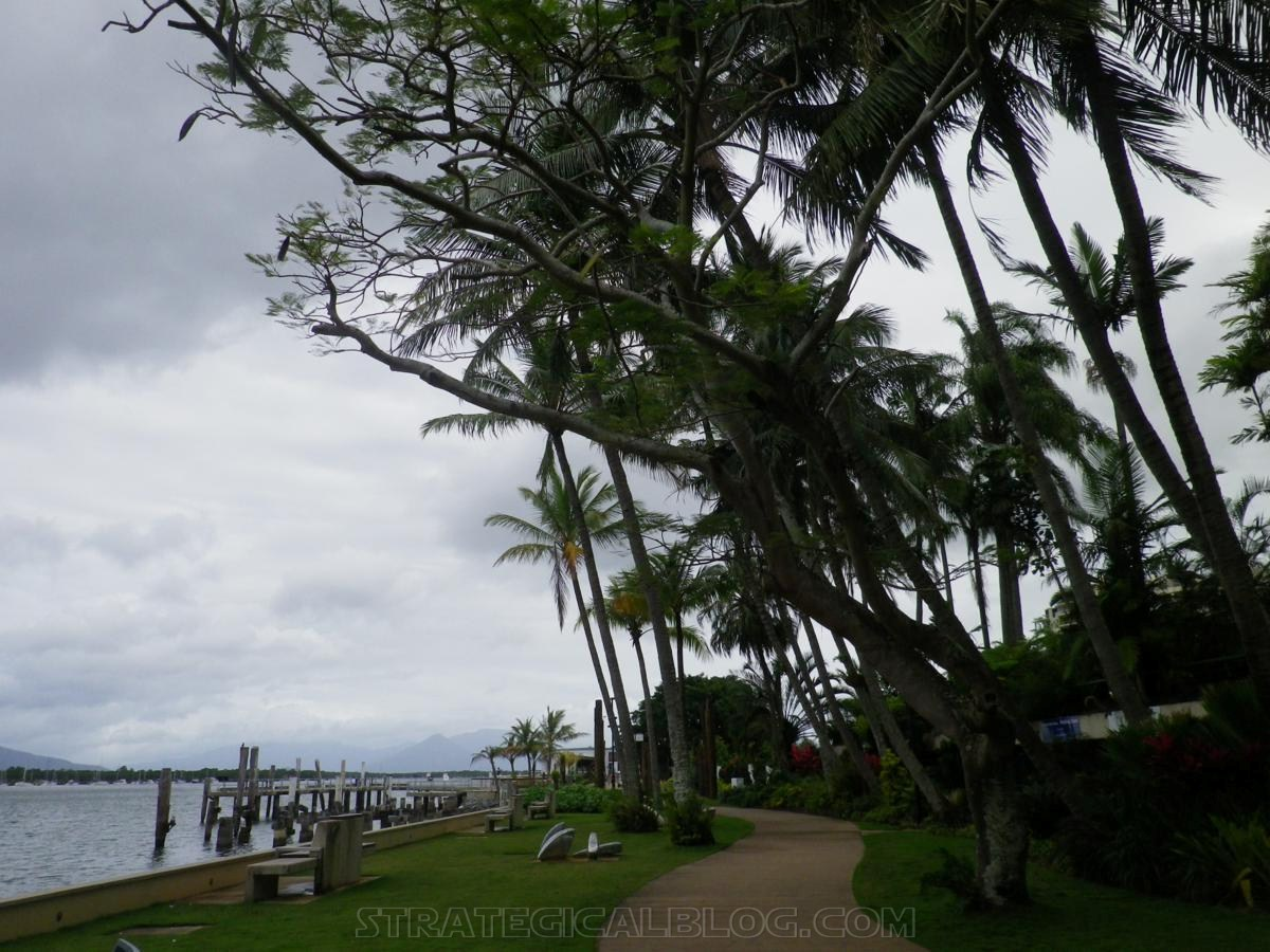 cairnswinter palm trees (6)