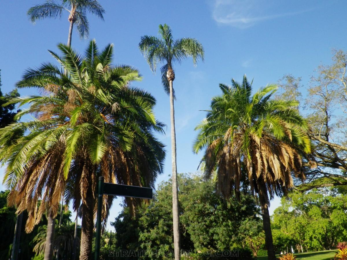 City Botanic Gardens Brisbane (12)