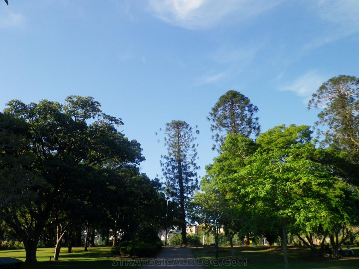 City Botanic Gardens Brisbane (16)