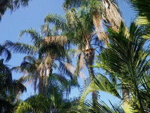 City Botanic Gardens Brisbane (23)