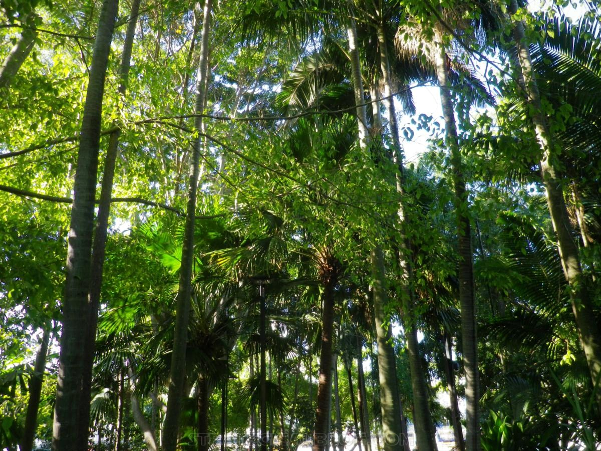 City Botanic Gardens Brisbane (24)