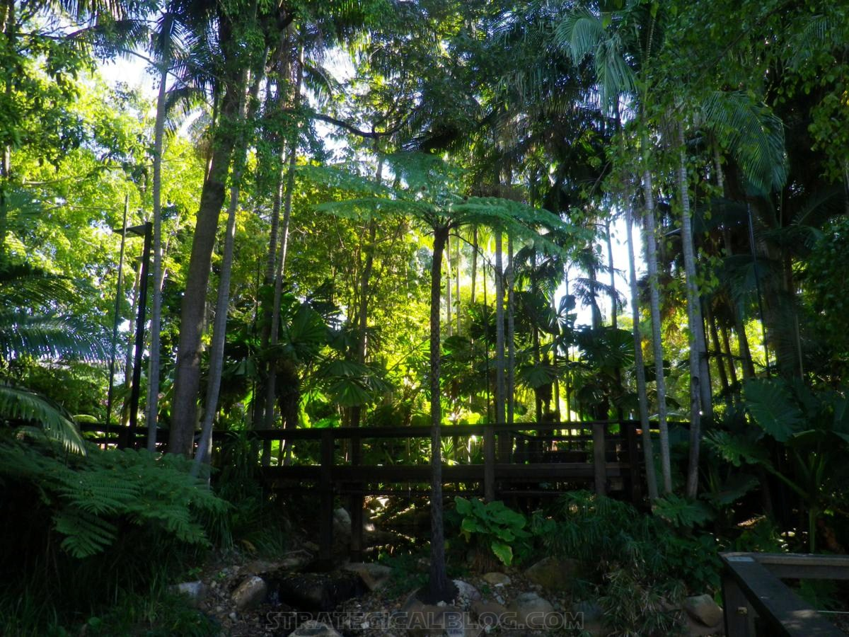 City Botanic Gardens Brisbane (25)