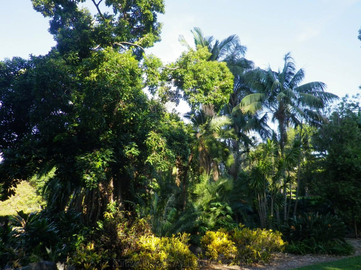 City Botanic Gardens Brisbane (4)