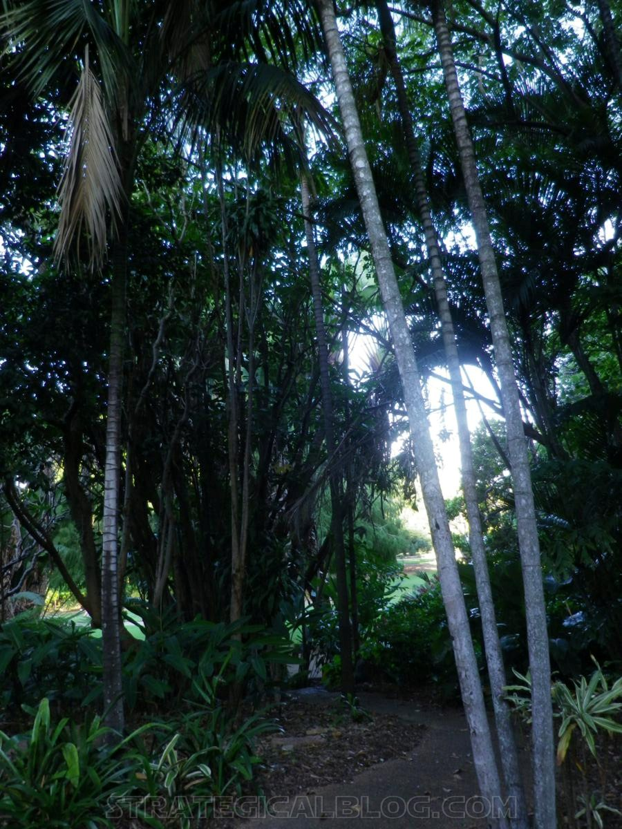 City Botanic Gardens Brisbane (5)