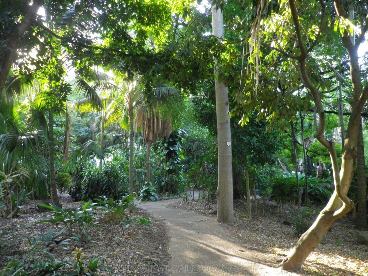 City Botanic Gardens Brisbane (9)