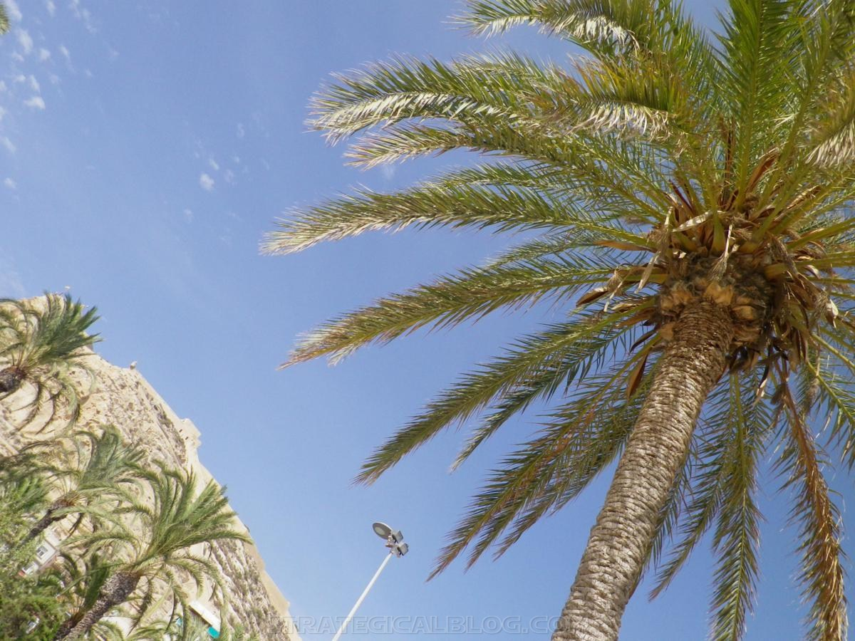 palmera plage beach alicante strategicalblog (1)