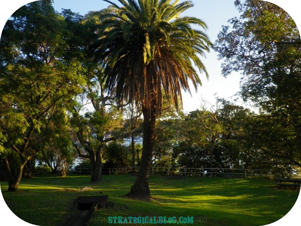 10 places to see in sydney australia royal gardens (1)